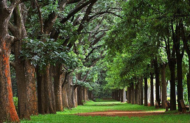 أهم الأماكن السياحية للزيارة في بنغالور