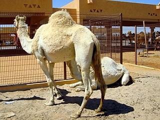 أجمل المعالم السياحية في مدينة العين بإمارة أبو ظبي